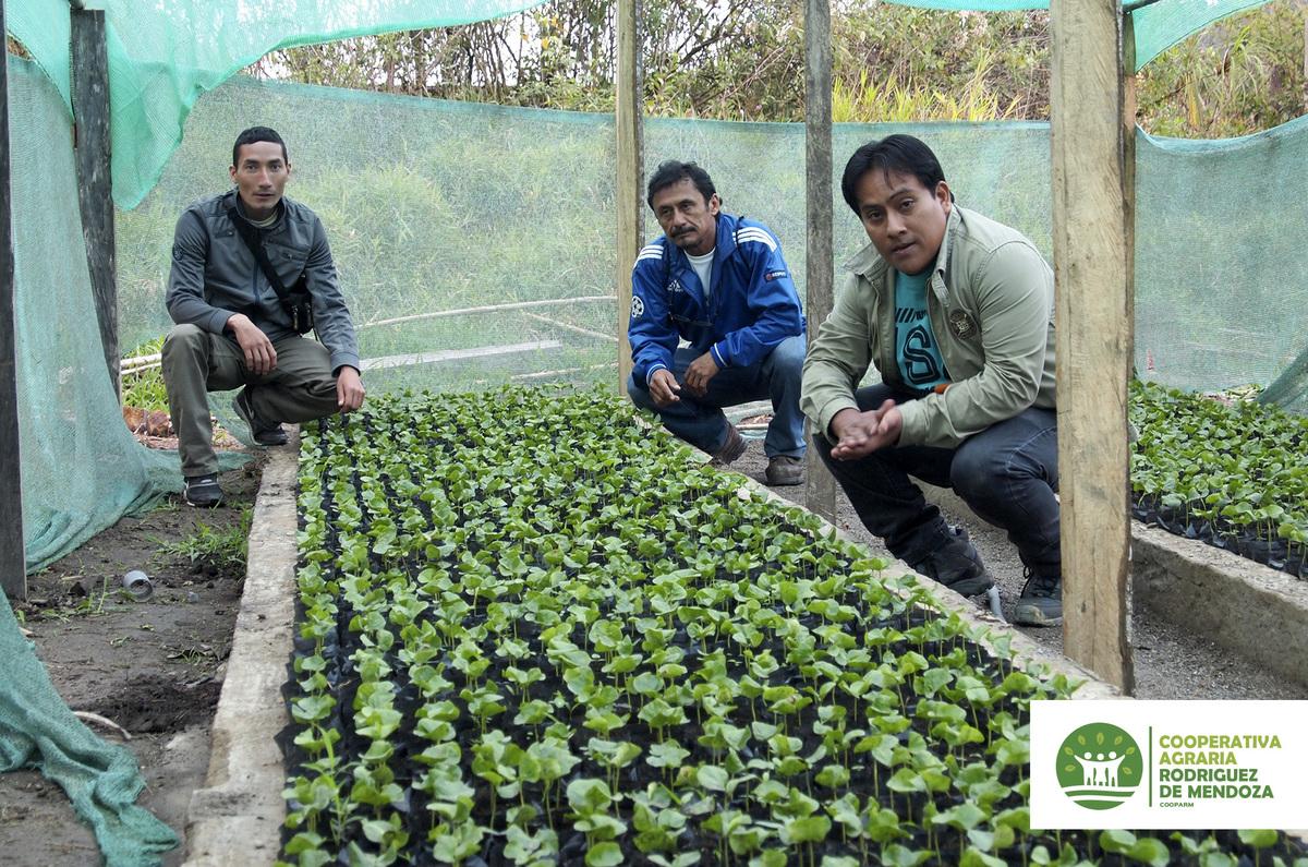 Construcci n del vivero de plantones de caf for Vivero de cafe pdf